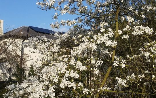 A Glorious Mothering Sunday