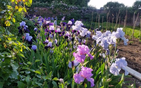 NGS Garden Opening - Saturday 8th June, 12:30pm
