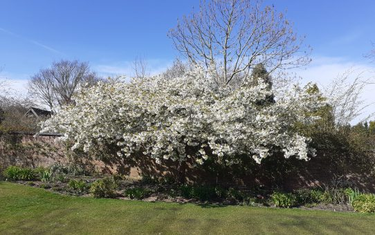 Beautiful blossom!